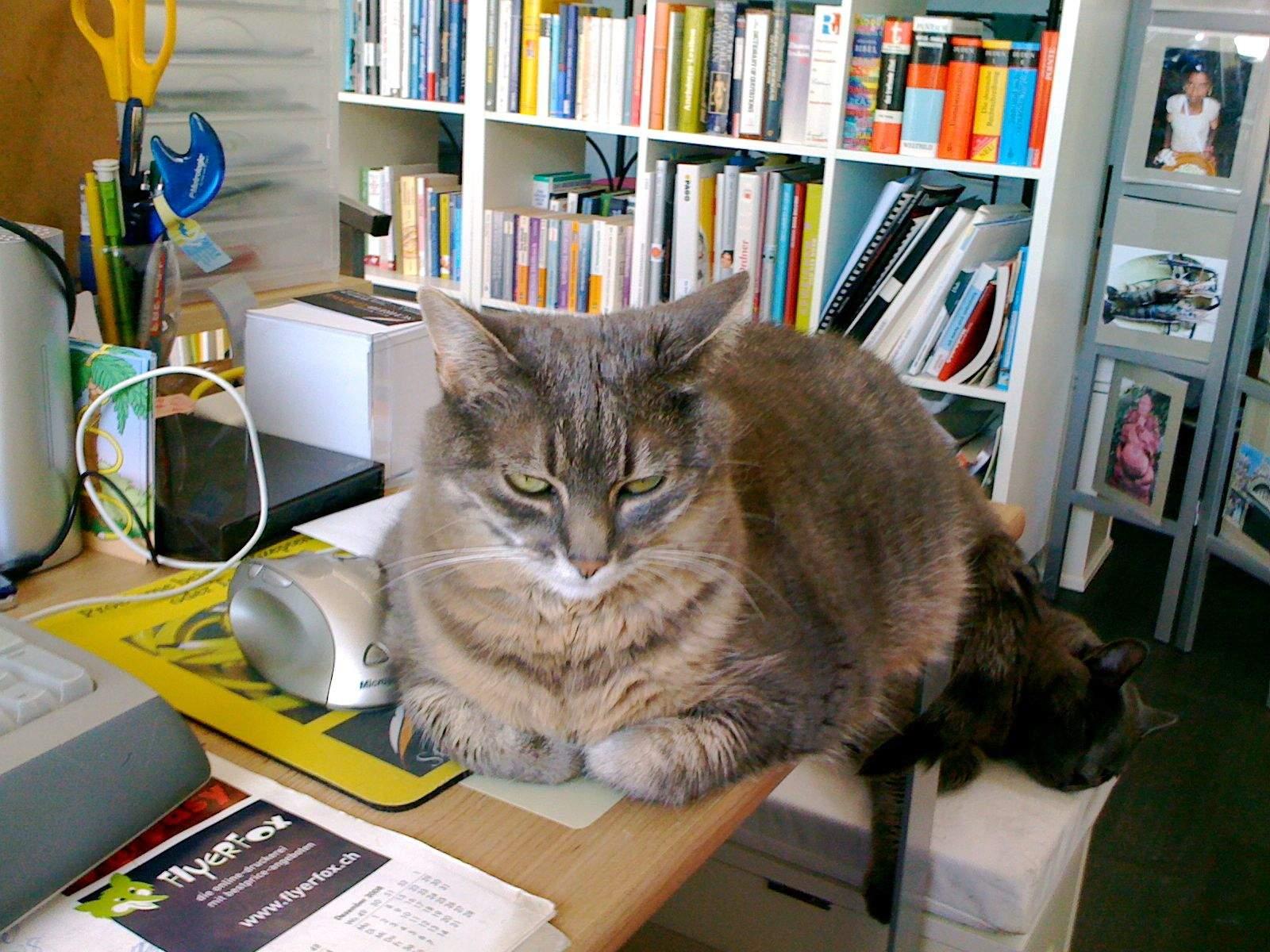 Bonsai, die Bürokatze der Schreib-Lounge