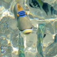 Fische füttern am Roten Meer